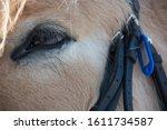 Eye Closeup Photo Of A...