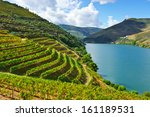 vineyards in the valley of the... | Shutterstock . vector #161189531