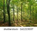 autumn dawn in magic forest   Shutterstock . vector #161215037