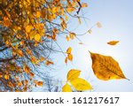 Stock photo autumn leaves falling down close up photo with focus on leaf 161217617