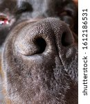 Small photo of Tip of the nose of a black dog, closeup. Large nostrils of the pet. Concept: good sense of smell, smell