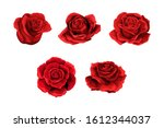 Scarlet Rose Flowers  Red Buds...
