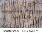 Wooden Palm Tree Bark Texture...