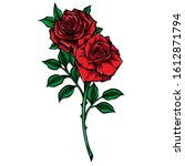 red rose stem vector... | Shutterstock .eps vector #1612871794