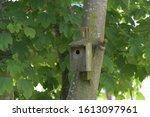 A Bird Box Fixed To A Tree