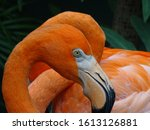 bright beautiful orange greater ...