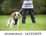 Stock photo boy taking puppy for walk on lead 161313659