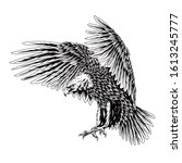 Bald Eagle Flying Swoop Line...