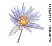 Blue Flower Sacred Lotus Symbol ...