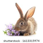 Gray Rabbit With Flowers...