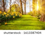 Spring landscape. Sun rays shining on a meadow flowers. garden in spring - stock photo