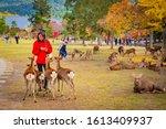 Japan. Deer And People In Nara...