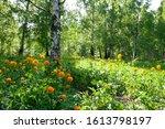 Spring Flowering. Spring Orange ...