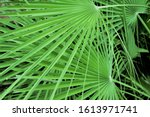 Bright Green Abstract Of Palm...
