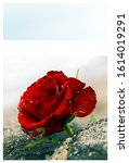 Sympathy Card. Frame With Red...