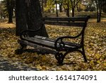 Small photo of Autumn day with a lot of yellow leaves which give ground strong and beautiful gold color