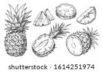 sketch of pineapple. isolated... | Shutterstock .eps vector #1614251974