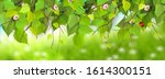 spring border with branches and ... | Shutterstock .eps vector #1614300151