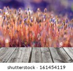 springtime moss and wooden floor | Shutterstock . vector #161454119