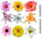 Set Of Flower Heads Isolated O...