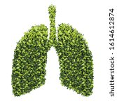 Lungs With Green Leaf. Gray...