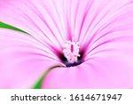 Pink Flower. Close Up Flower...