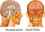 brain | Shutterstock .eps vector #16147426