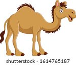 cartoon camel isolated on white ... | Shutterstock .eps vector #1614765187
