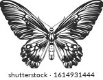 vector engraving style insect... | Shutterstock .eps vector #1614931444