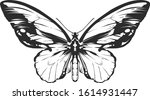 vector engraving style insect... | Shutterstock .eps vector #1614931447