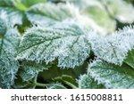 Hoarfrost On A Leaf  Frozen...