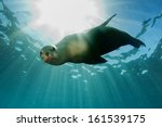 Sea Lion Seal Coming To You...