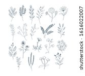 hand draw with herbs and... | Shutterstock .eps vector #1616022007