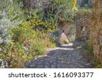 Taormina   The Path Among The...