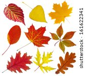 Collection Of Autumn Leaves....