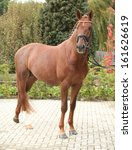 Small photo of Beautiful dutch warmblood with perfect hair style in autumn