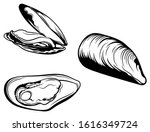 Set Of Mussels. Collection Of...