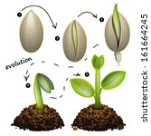 Stages Of Plant Growth....