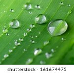 Banana Leaf With Drops Of Water