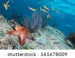 Sea Stars In A Reef Colorful...