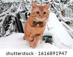 A Red Cat In A Festive Bow Ti...