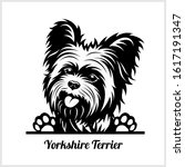 Dog Head  Yorkshire Terrier...