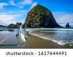 Pelican Landing At Haystack Rock
