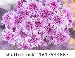 Close Up White Purple...