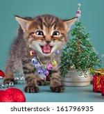 cute little kitten wearing a... | Shutterstock . vector #161796935