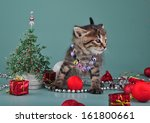 cute little kitten wearing a... | Shutterstock . vector #161800661