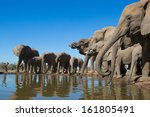 a wide angle photo of a herd of ... | Shutterstock . vector #161805491