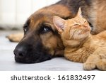 Stock photo close up cat and dog together lying on the floor 161832497