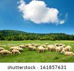 herd of sheep | Shutterstock . vector #161857631