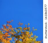 autumn leaves with the blue sky ... | Shutterstock . vector #161863577